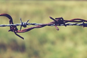 barbed-wire-887275_640